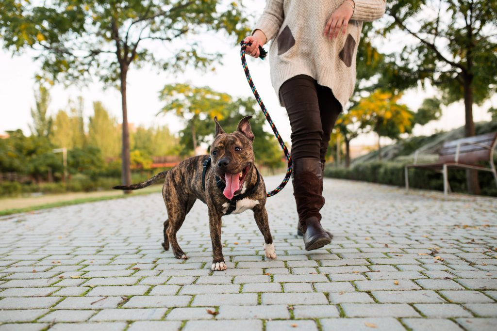 woman walking dog on leash
